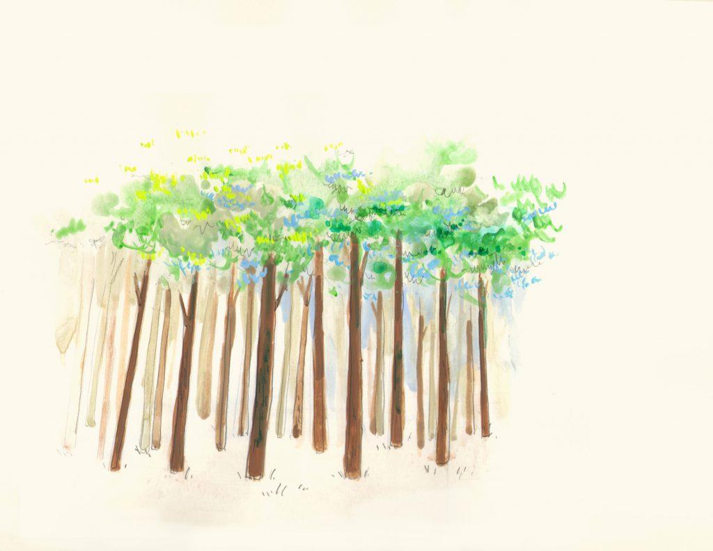富士ひのき、しずおか優良木材で地元の森を守る家づくり。