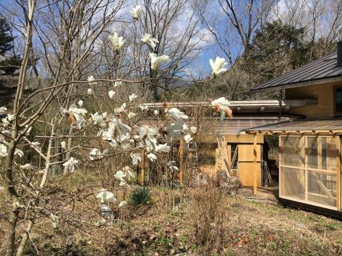 朝霧高原での暮し:わが家の庭造り1