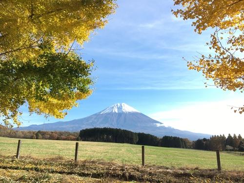 紅葉と富士山のベストマッチ続き