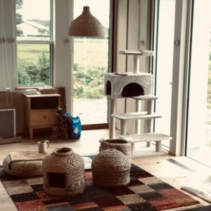 猫も楽しい、富士宮の家