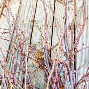桜の枝染めワークショップ