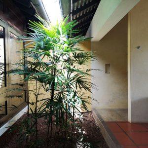 寝室と水回りの間の中庭