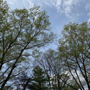 富士宮市,木の家の庭から