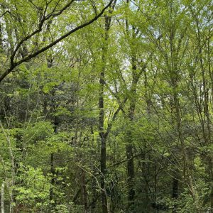 朝霧高原の雑木林