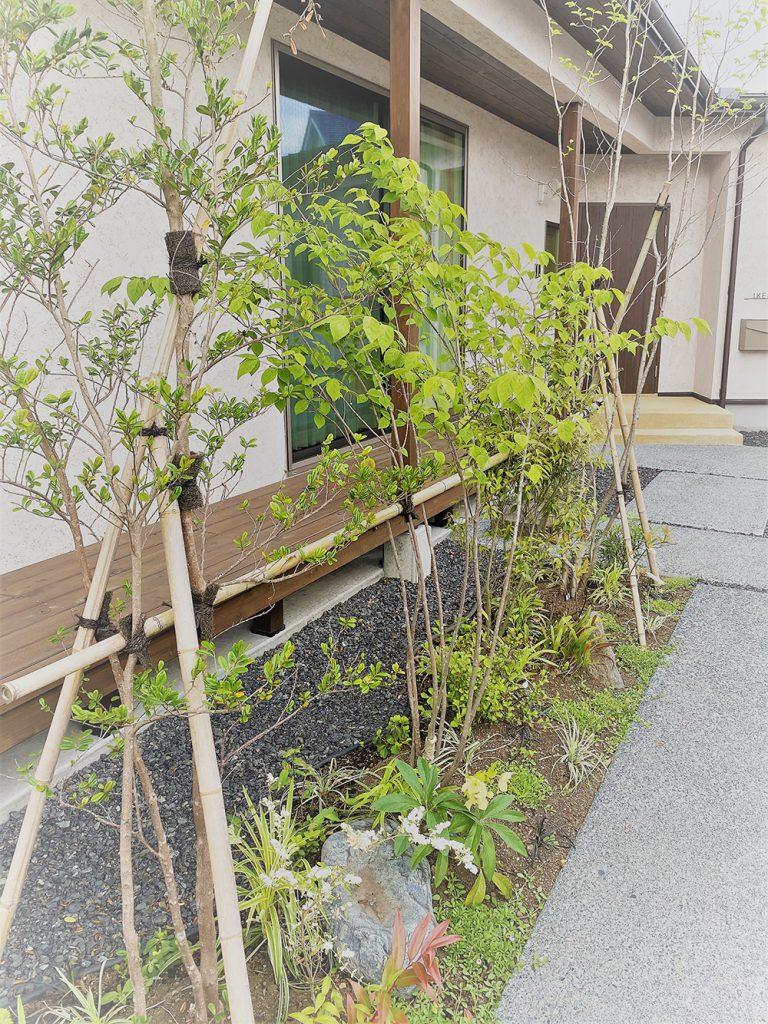 マイホームの庭、葉が伸びてきた