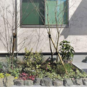 施行中の庭の植栽、マイホーム
