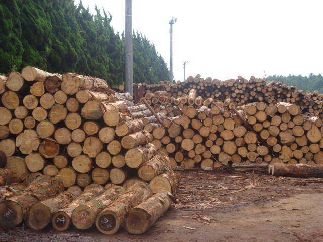 富士ひのき加工協同組合、原木市場