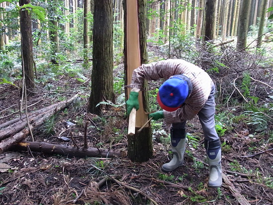 2千4百人規模の間伐、きらめ樹の輪の広がり