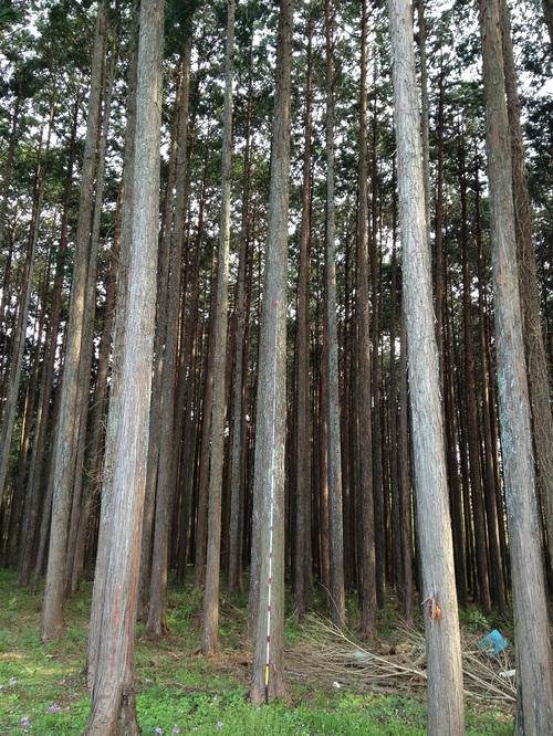 今シーズンの森の間伐も無事終了しました。
